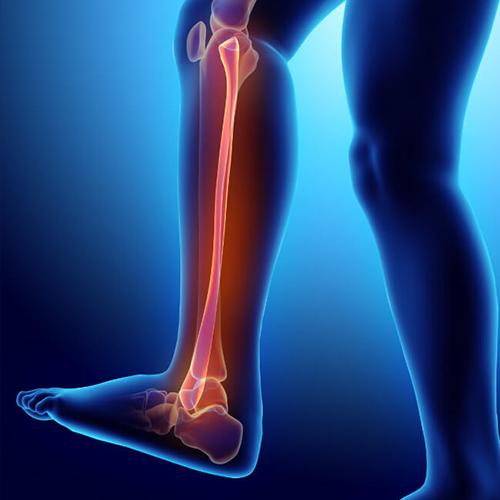 lower-leg
