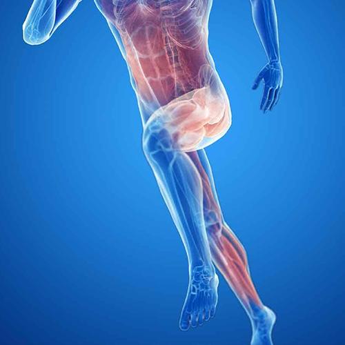 uppar-leg-pain